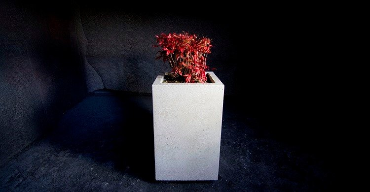 TALL LOW PLANTER